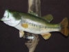 Large Mouth Bass Mount