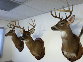Game Head Mounts